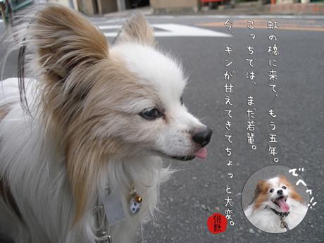 kotetsu5yrs.jpg